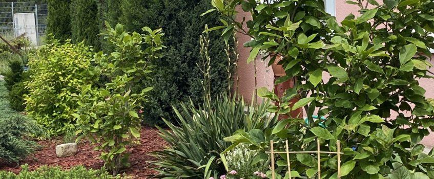 Ogród – oaza spokoju dla naszych dzieci…